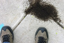 Killing ants without Pestecides / Ant pests