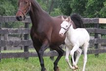 All Things Equine / by Anne Wilson