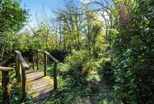 Gorgeous gardens / Property for sale in Cornwall with gorgeous gardens.