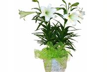 Easter / Easter floral designs & gift ideas