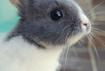 Sooo Cute! / by Nancy Pinson