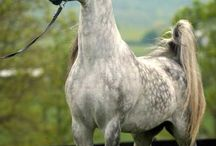 Horses 2 / by Eleanor Wojnar
