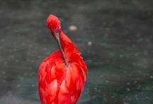 птицам фауна