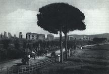 Gli Alberi di Roma