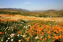 Visit  #NamaquaWestCoast / #Visit as a tourist leave as a friend