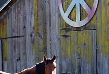 I love barns too / by Sario