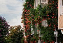 I love houses in Istanbul / by Di
