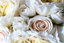 Nature : Fleurs