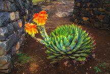 Lesotho Flora