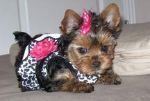 My ROXY Girl!!!