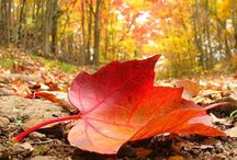 Falling into Fall  / My FAVORITE season by far . . .  / by Barbara Hainsworth