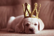 photos // cute animals / by Arvee Marie Arroyo