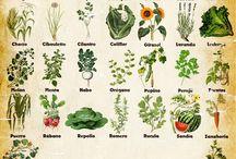 Plantas y huerto