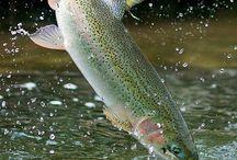 Favorite trout pix