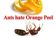 Pest Predicaments / Solutions to pest control issues for the home