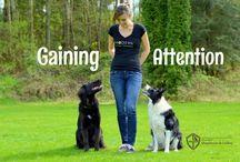Training - Dogs