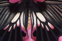 Mariposas Analys