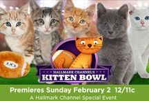 KITTEN  BOWL 2014 #KittenBowl @KittenBowlTV / Official Pinterest of the Hallmark Channel's Kitten Bowl. The biggest feline showdown in TV history. Favorite your favorite kitten and pin player profiles to your board. / by Hallmark Channel