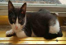 Animal Adoption! #Urgent