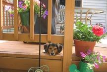 My wonderful Beagle Mix dog.....Maisy / Ain't Nothing But a Hound Dog...............