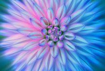 blomster :)