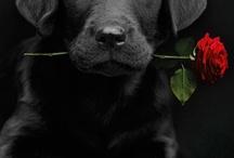 gorgous dogs