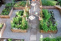 Köksträdgård planering