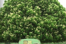 Vintage Trailer Inspiration / by Aimee Carpenter