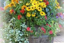 kvety v kvetinaci