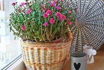 φυτα που καθαριζουν το σπιτι