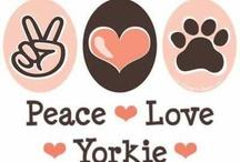 Yorkies y más Dogs