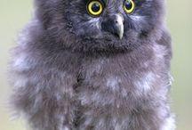 Owls 1.