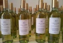 vino + vermentino + Sardegna + Gallura + Arzachena + Italia / Vermentino di Gallura: il tipico vino bianco di Sardegna