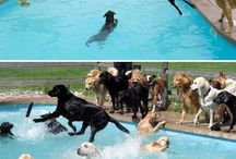 Oh my god! Dogs!!