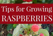 pfi - raspberry / blackberry