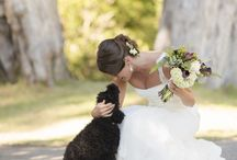 weddings and animals