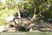 Mid Eastern Red Deer hunting in Turkey