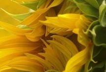 bizondereplanten en bloemen
