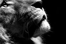 Animals / by Garrick Stark