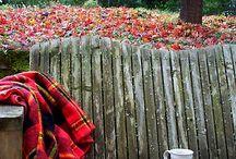 Осень... Любимое время...
