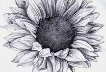 Ay çiçek