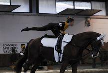 Le Calabrais / Le Calabrais est une ancienne race originaire de la Calabre au sud de l'Italie. Il est issu d'un groupe de chevaux Arabes importés d'Afrique du Nord, pendant la période Bourbon et a été croisé avec le Pure Race Espagnol et l'Arabe.