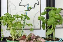 Moestuin - inspiratie / Verbouwen van eigen groente en fruit
