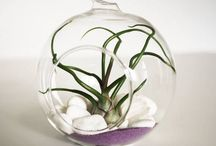 Airplant decorations, Alvina Decco / My own decorations made with airplants.