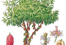 gravures plantes