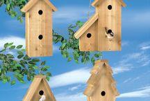 Căsuțe păsări