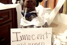 Public Pet Shaming / Guilty Pets Atone For Their Actions