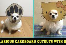 10+ Hilarious Photos Of Dogs - Japanese Woman Creates Hilarious Cardboard Cutouts With Her Dog