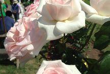 ROSE garden! / バラ