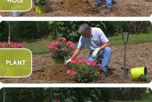 How to... / Great Gardening How to's...